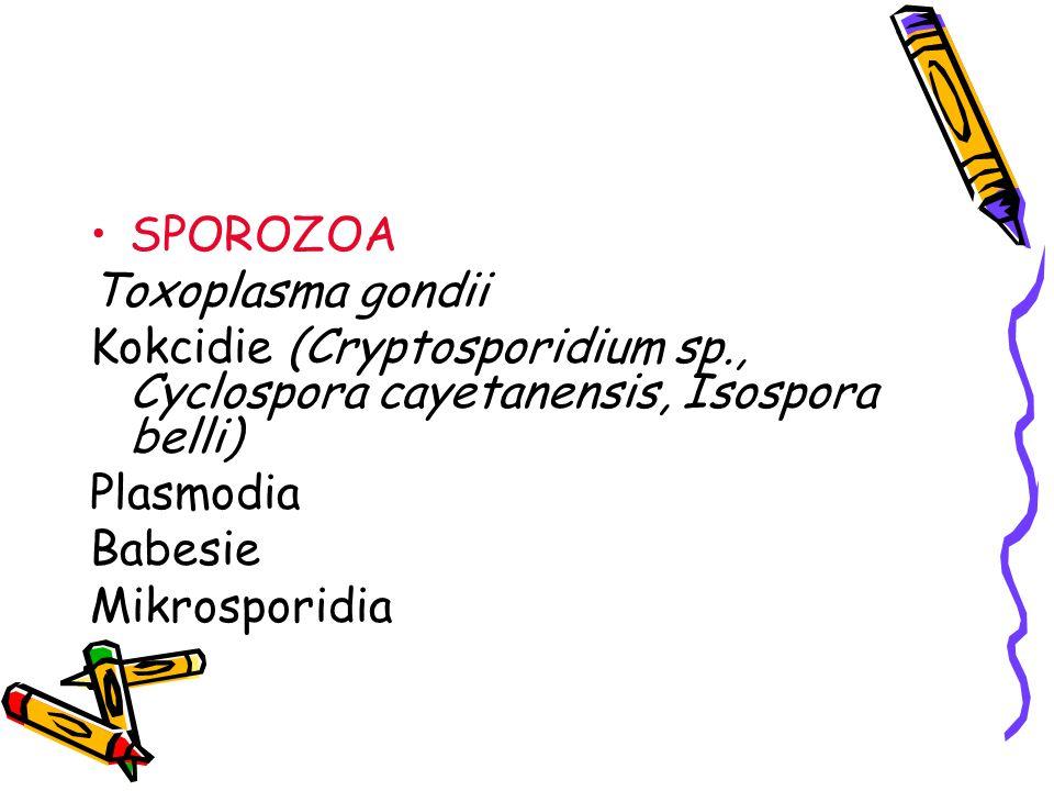 SPOROZOA Toxoplasma gondii Kokcidie (Cryptosporidium sp., Cyclospora cayetanensis, Isospora belli) Plasmodia Babesie Mikrosporidia