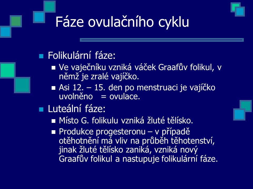 Fáze ovulačního cyklu Folikulární fáze: Ve vaječníku vzniká váček Graafův folikul, v němž je zralé vajíčko. Asi 12. – 15. den po menstruaci je vajíčko