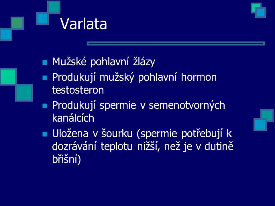 Varlata Mužské pohlavní žlázy Produkují mužský pohlavní hormon testosteron Produkují spermie v semenotvorných kanálcích Uložena v šourku (spermie potř