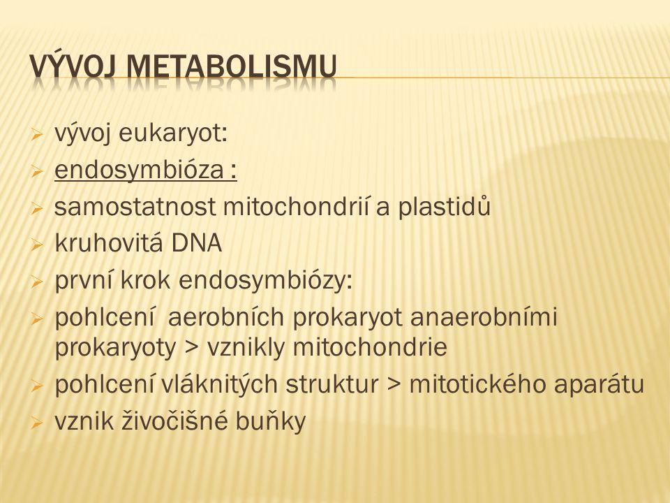  vývoj eukaryot:  endosymbióza :  samostatnost mitochondrií a plastidů  kruhovitá DNA  první krok endosymbiózy:  pohlcení aerobních prokaryot anaerobními prokaryoty > vznikly mitochondrie  pohlcení vláknitých struktur > mitotického aparátu  vznik živočišné buňky