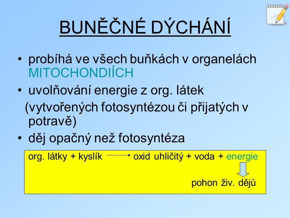 BUNĚČNÉ DÝCHÁNÍ probíhá ve všech buňkách v organelách MITOCHONDIÍCH uvolňování energie z org. látek (vytvořených fotosyntézou či přijatých v potravě)
