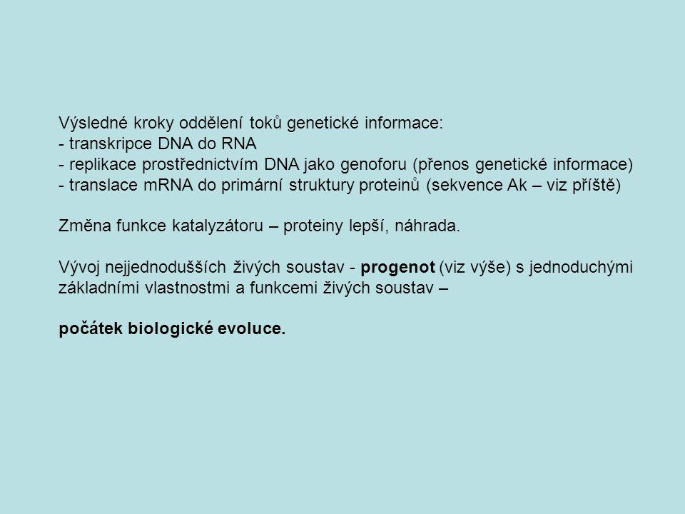 Výsledné kroky oddělení toků genetické informace: - transkripce DNA do RNA - replikace prostřednictvím DNA jako genoforu (přenos genetické informace)
