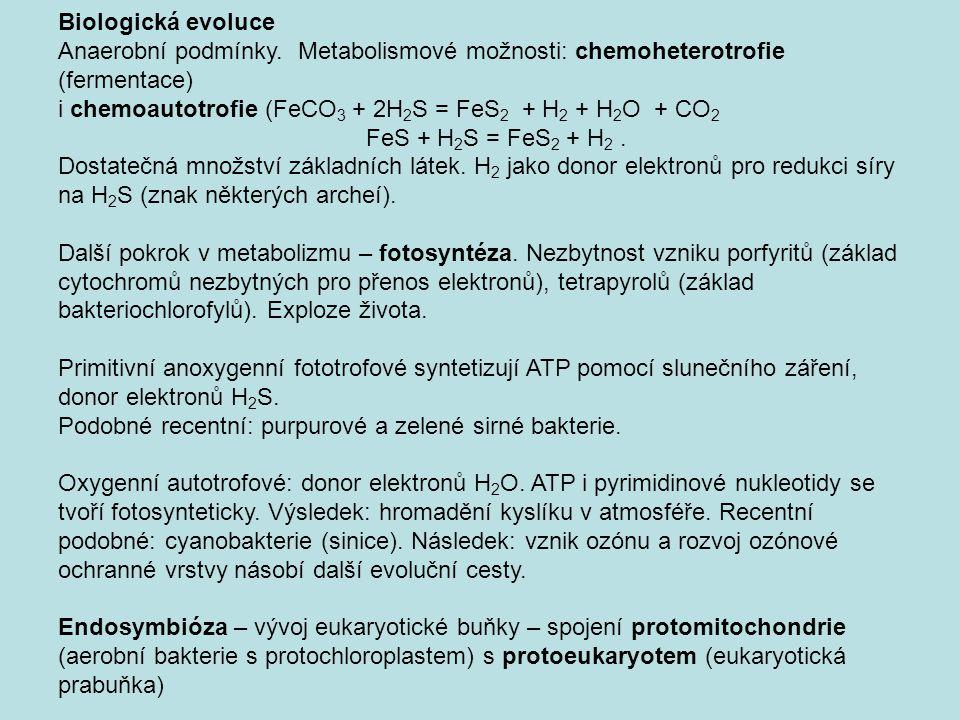 Biologická evoluce Anaerobní podmínky. Metabolismové možnosti: chemoheterotrofie (fermentace) i chemoautotrofie (FeCO 3 + 2H 2 S = FeS 2 + H 2 + H 2 O