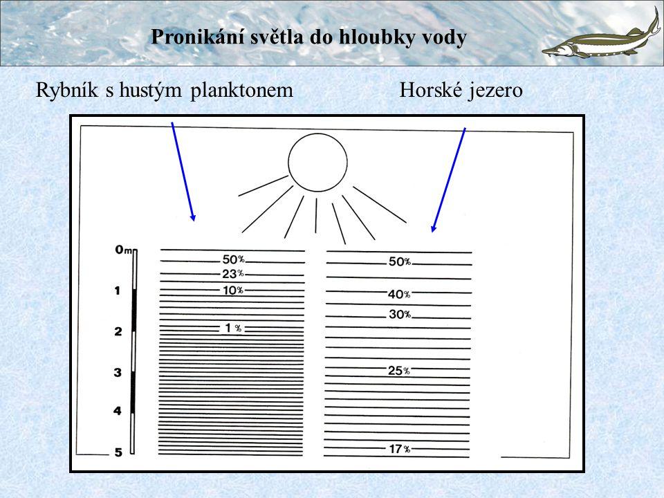 Pronikání světla do hloubky vody Rybník s hustým planktonem Horské jezero