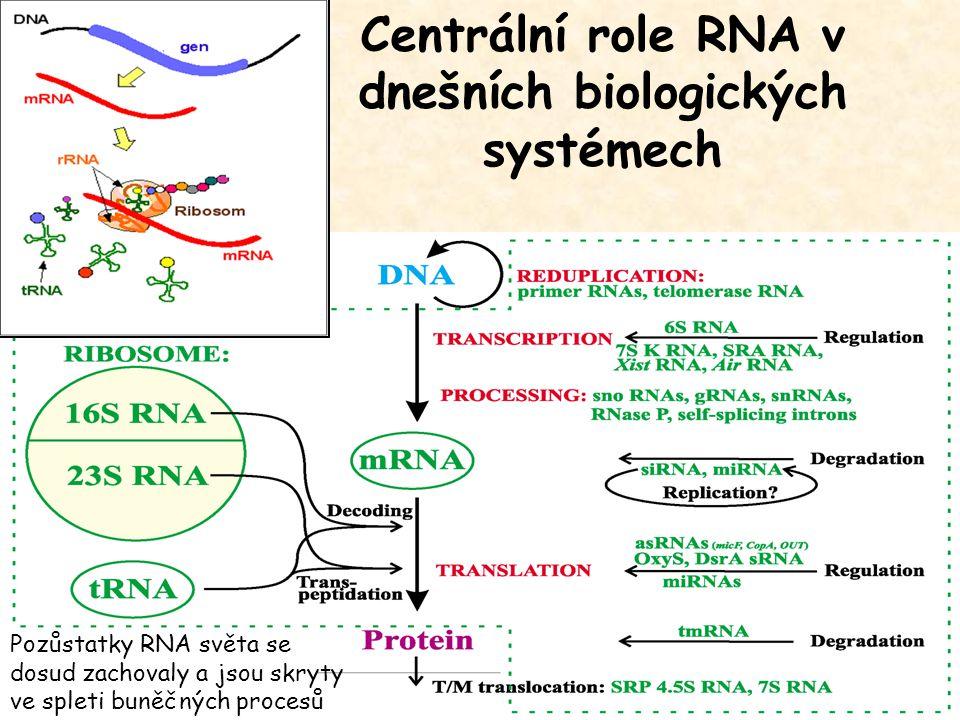 Centrální role RNA v dnešních biologických systémech Pozůstatky RNA světa se dosud zachovaly a jsou skryty ve spleti buněčných procesů