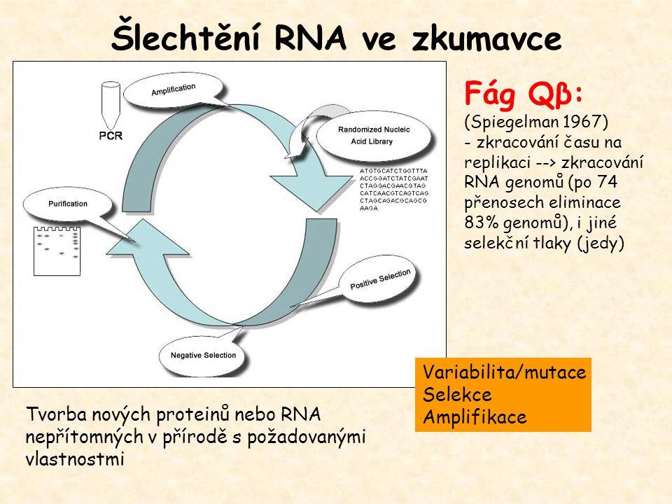 Šlechtění RNA ve zkumavce Variabilita/mutace Selekce Amplifikace Tvorba nových proteinů nebo RNA nepřítomných v přírodě s požadovanými vlastnostmi Fág Qβ: (Spiegelman 1967) - zkracování času na replikaci --> zkracování RNA genomů (po 74 přenosech eliminace 83% genomů), i jiné selekční tlaky (jedy)