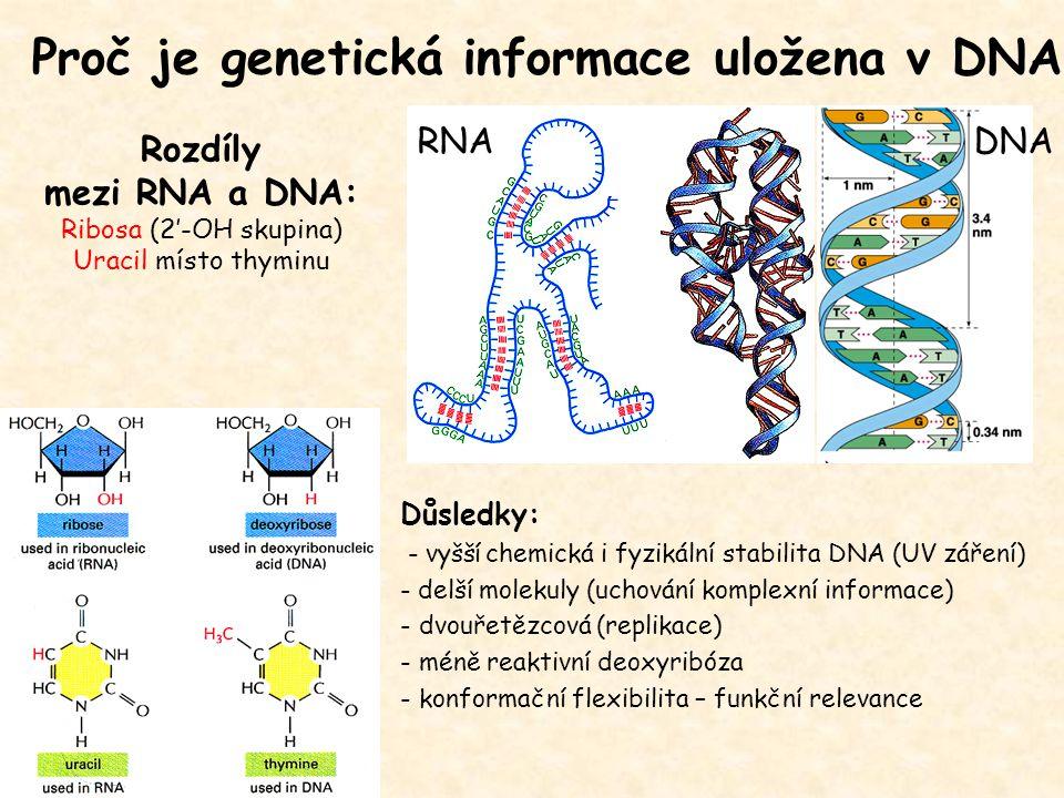 Rozdíly mezi RNA a DNA: Ribosa (2'-OH skupina) Uracil místo thyminu Důsledky: - vyšší chemická i fyzikální stabilita DNA (UV záření) - delší molekuly (uchování komplexní informace) - dvouřetězcová (replikace) - méně reaktivní deoxyribóza - konformační flexibilita – funkční relevance Proč je genetická informace uložena v DNA DNARNA