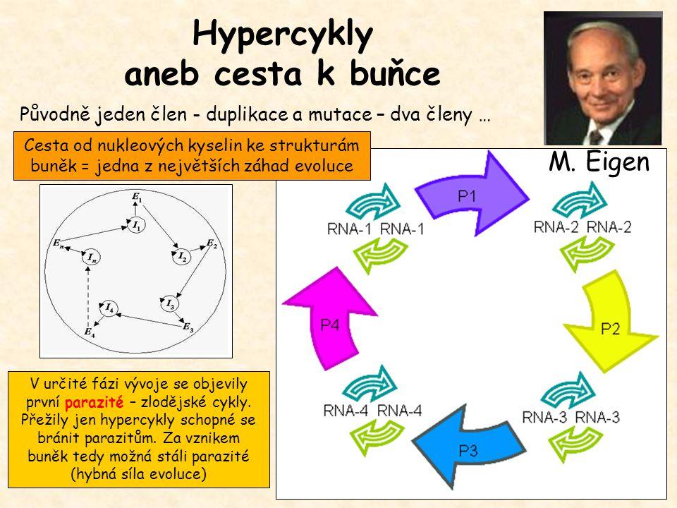 Hypercykly aneb cesta k buňce Původně jeden člen - duplikace a mutace – dva členy … V určité fázi vývoje se objevily první parazité – zlodějské cykly.
