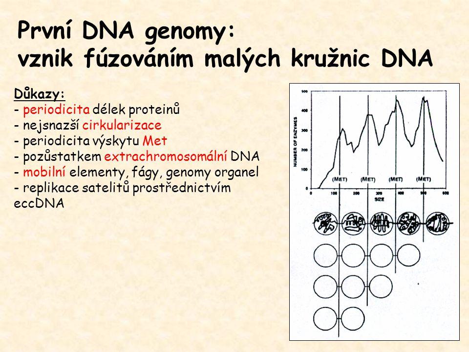 První DNA genomy: vznik fúzováním malých kružnic DNA Důkazy: - periodicita délek proteinů - nejsnazší cirkularizace - periodicita výskytu Met - pozůstatkem extrachromosomální DNA - mobilní elementy, fágy, genomy organel - replikace satelitů prostřednictvím eccDNA