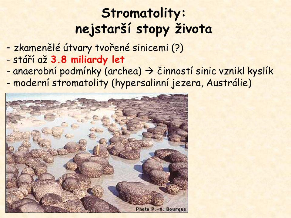 Stromatolity: nejstarší stopy života – zkamenělé útvary tvořené sinicemi (?) - stáří až 3.8 miliardy let - anaerobní podmínky (archea)  činností sinic vznikl kyslík - moderní stromatolity (hypersalinní jezera, Austrálie)