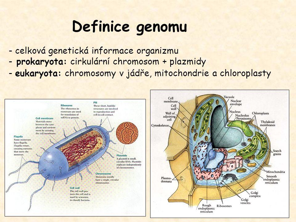 Definice genomu - celková genetická informace organizmu - prokaryota: cirkulární chromosom + plazmidy - eukaryota: chromosomy v jádře, mitochondrie a chloroplasty