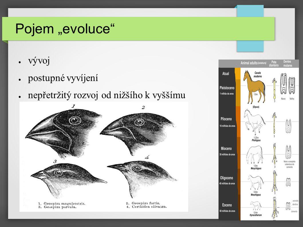 teorie endosymbiózy teorie kataklysmat neodarwinismus neotenie preadaptace mutace migrace genů divergence lamarekismus darwinismus fylogneze konvergence