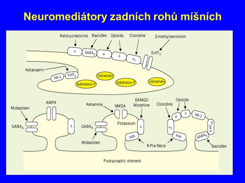 Neuromediátory zadních rohů míšních
