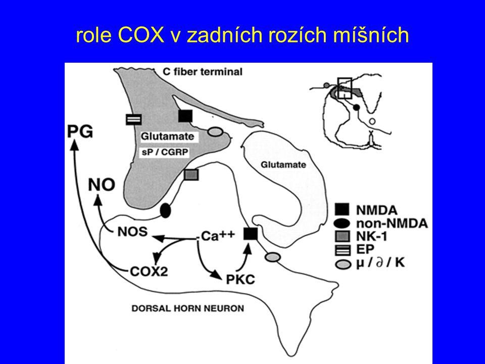 role COX v zadních rozích míšních