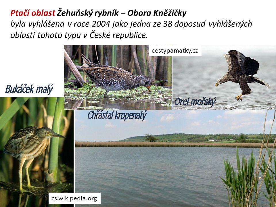 Ptačí oblast Žehuňský rybník – Obora Kněžičky byla vyhlášena v roce 2004 jako jedna ze 38 doposud vyhlášených oblastí tohoto typu v České republice. c