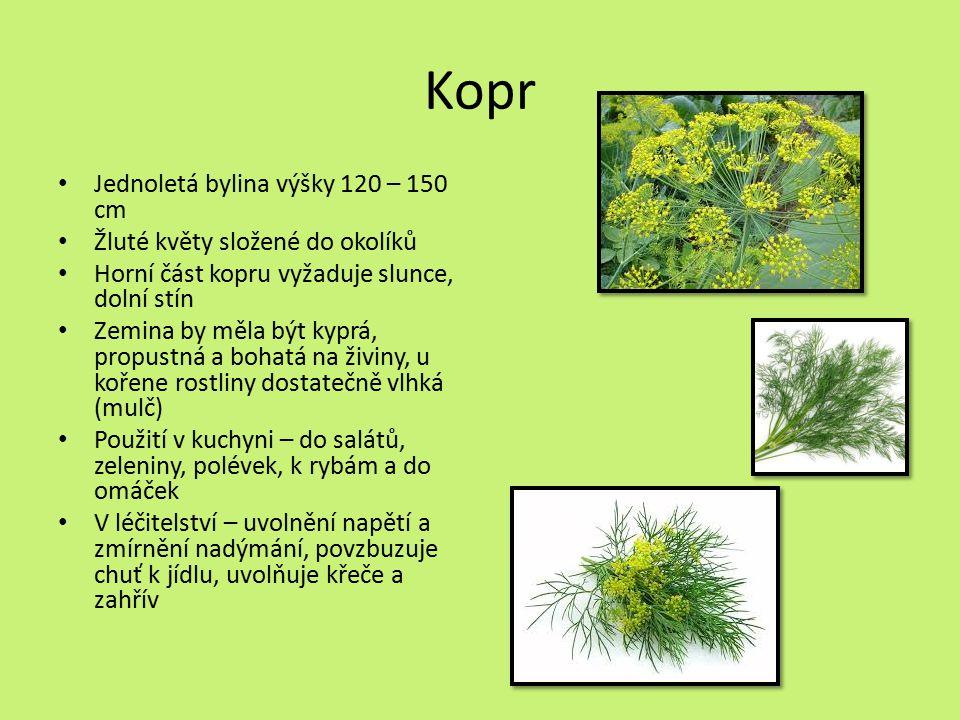 Kopr Jednoletá bylina výšky 120 – 150 cm Žluté květy složené do okolíků Horní část kopru vyžaduje slunce, dolní stín Zemina by měla být kyprá, propustná a bohatá na živiny, u kořene rostliny dostatečně vlhká (mulč) Použití v kuchyni – do salátů, zeleniny, polévek, k rybám a do omáček V léčitelství – uvolnění napětí a zmírnění nadýmání, povzbuzuje chuť k jídlu, uvolňuje křeče a zahřív