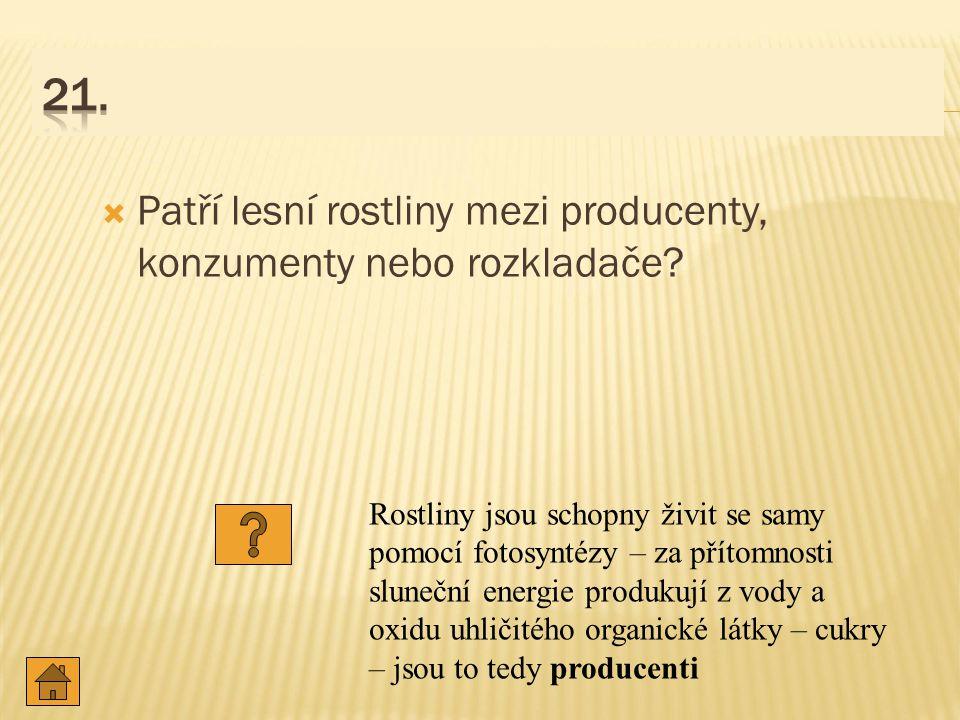  Patří lesní rostliny mezi producenty, konzumenty nebo rozkladače.
