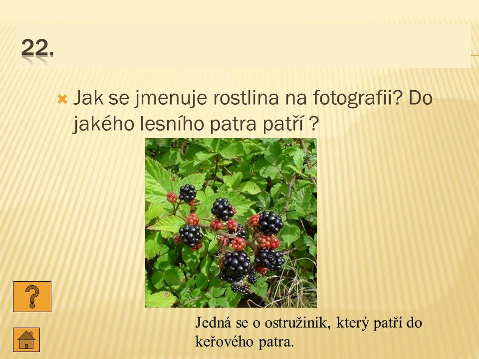  Jak se jmenuje rostlina na fotografii.Do jakého lesního patra patří .