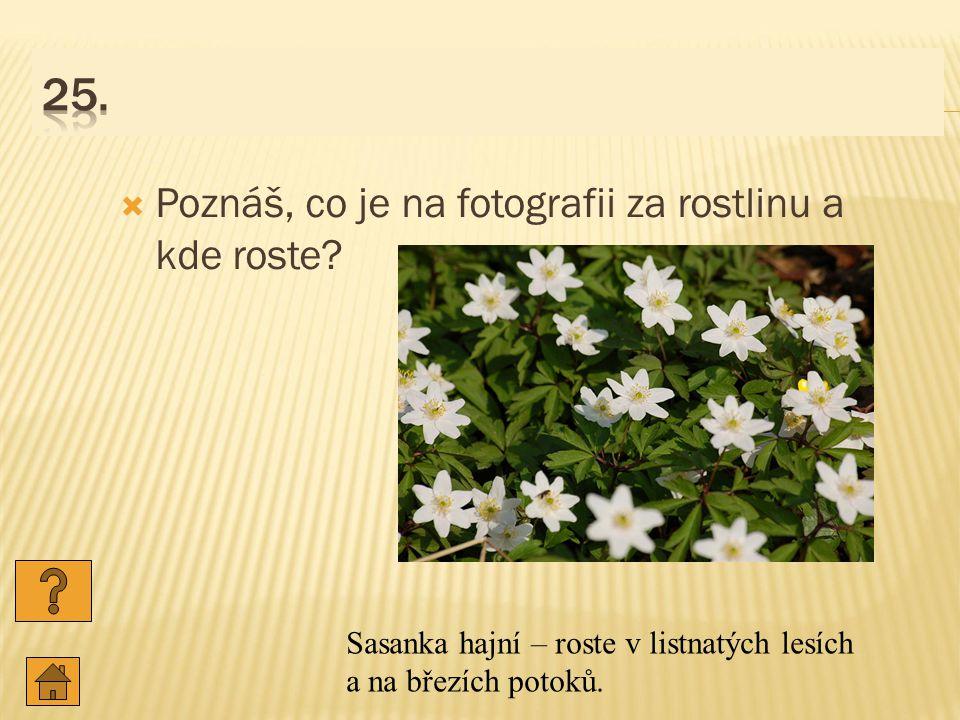  Poznáš, co je na fotografii za rostlinu a kde roste.