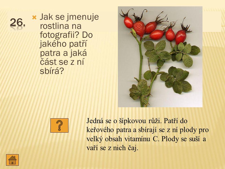  Jak se jmenuje rostlina na fotografii.Do jakého patří patra a jaká část se z ní sbírá.