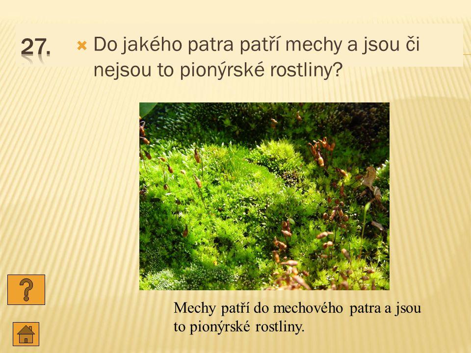  Do jakého patra patří mechy a jsou či nejsou to pionýrské rostliny.