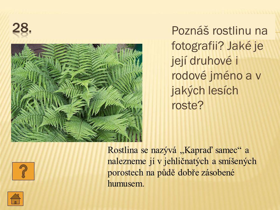 Poznáš rostlinu na fotografii.Jaké je její druhové i rodové jméno a v jakých lesích roste.