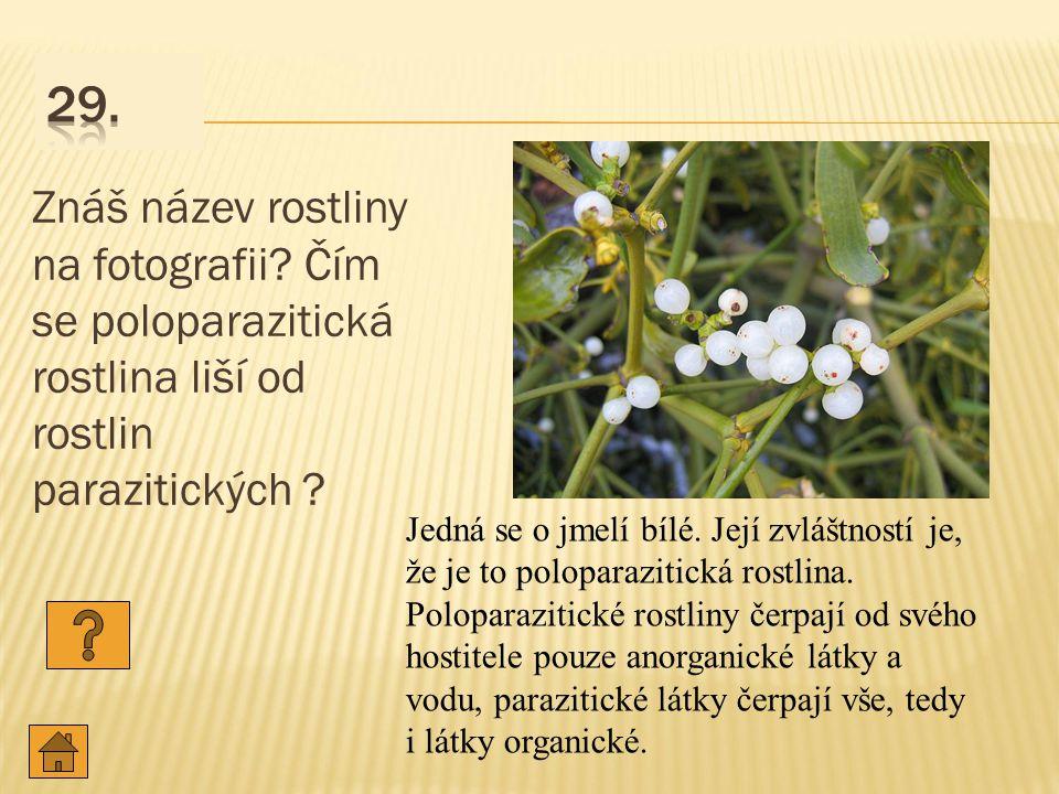 Znáš název rostliny na fotografii.Čím se poloparazitická rostlina liší od rostlin parazitických .