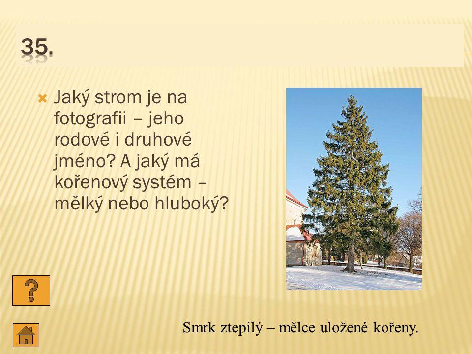  Jaký strom je na fotografii – jeho rodové i druhové jméno.