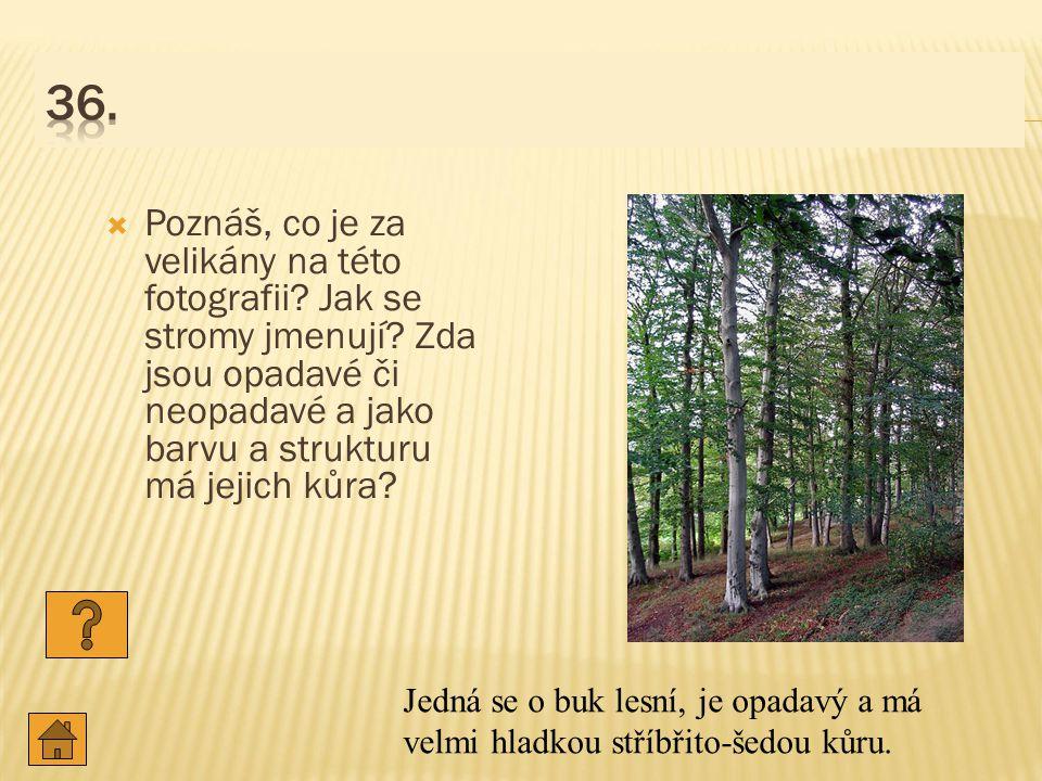  Poznáš, co je za velikány na této fotografii.Jak se stromy jmenují.