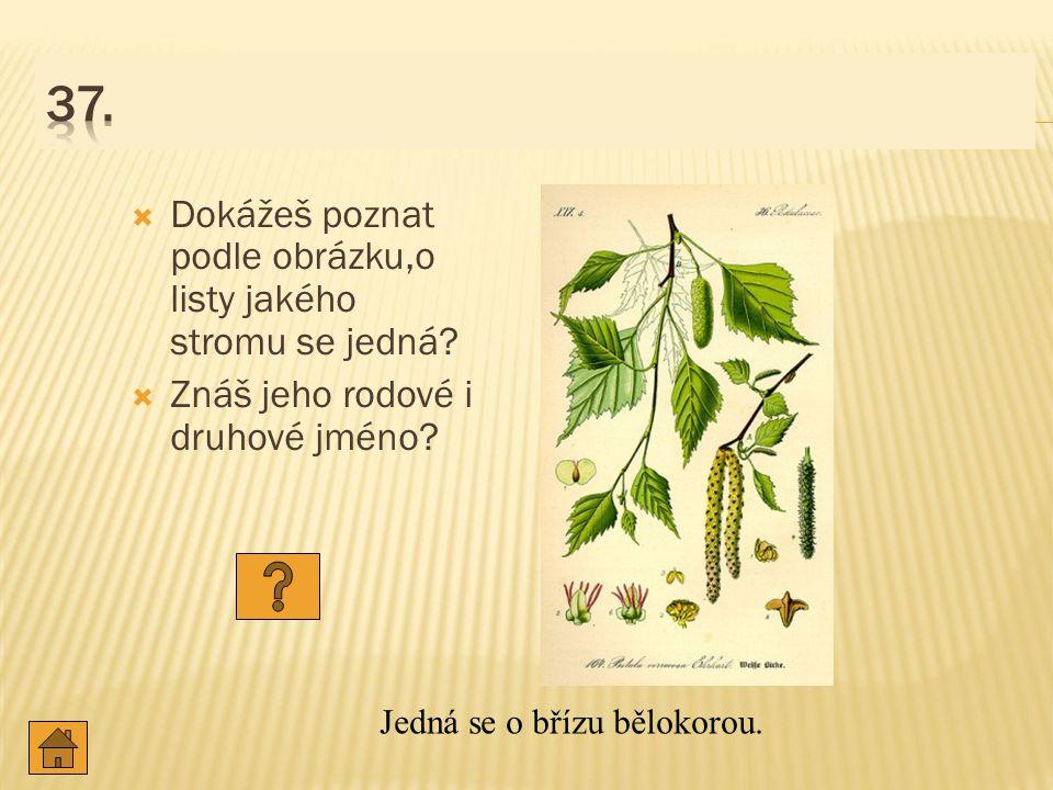  Dokážeš poznat podle obrázku,o listy jakého stromu se jedná.
