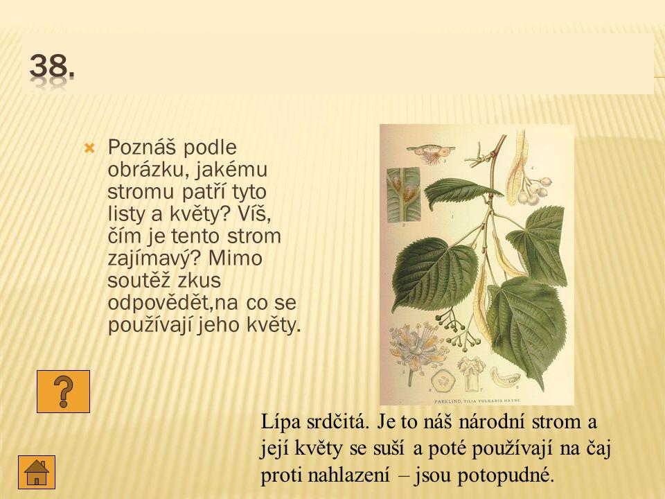  Poznáš podle obrázku, jakému stromu patří tyto listy a květy.