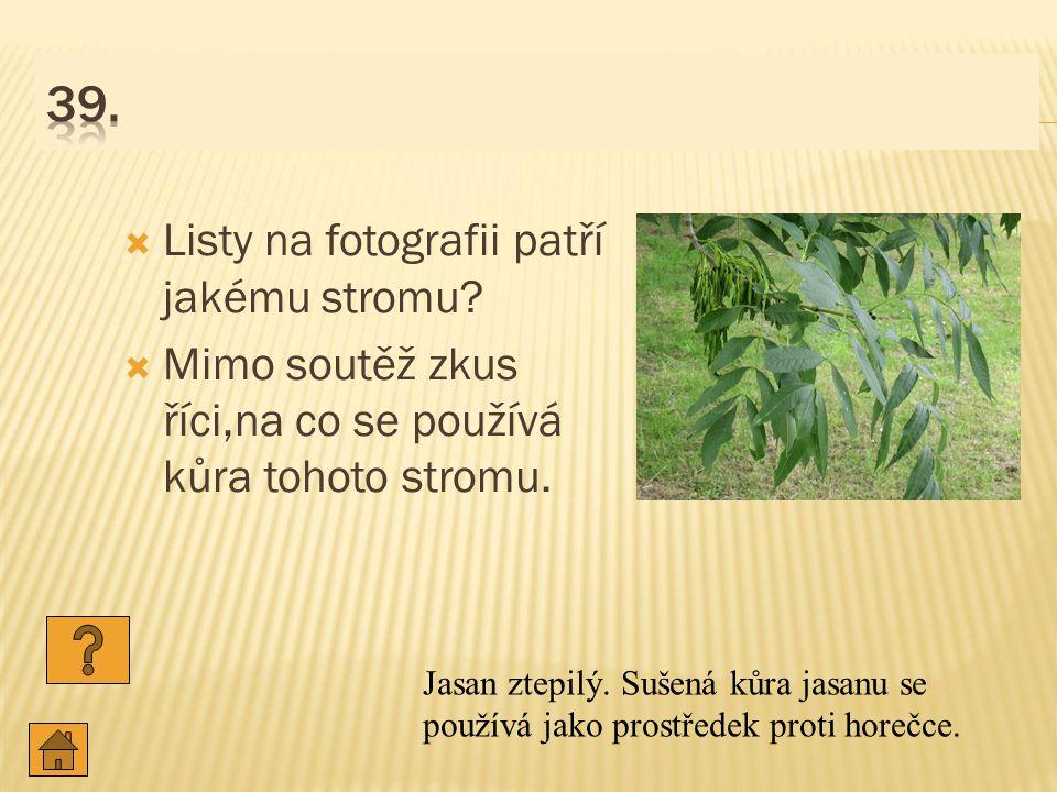  Listy na fotografii patří jakému stromu.