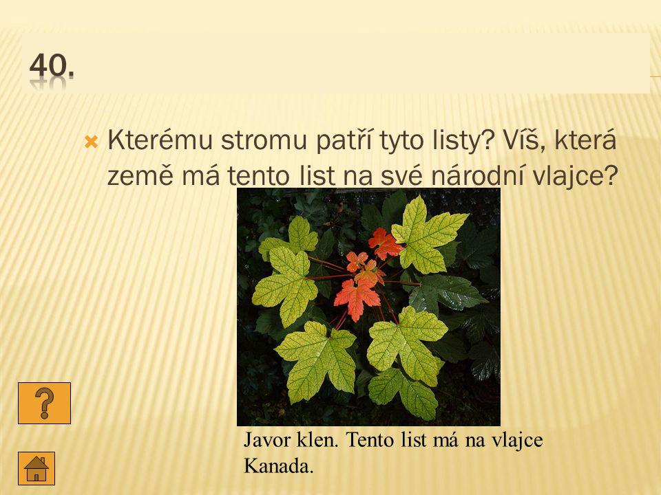  Kterému stromu patří tyto listy.Víš, která země má tento list na své národní vlajce.