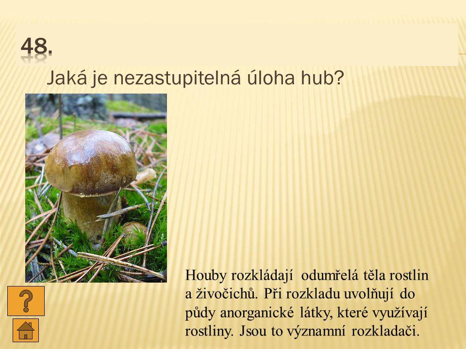Jaká je nezastupitelná úloha hub.Houby rozkládají odumřelá těla rostlin a živočichů.