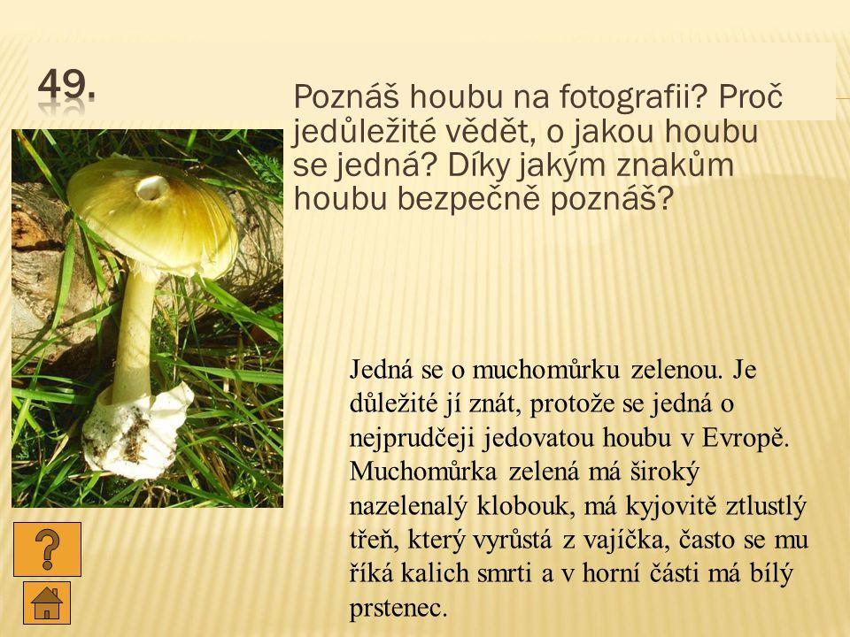 Poznáš houbu na fotografii.Proč jedůležité vědět, o jakou houbu se jedná.
