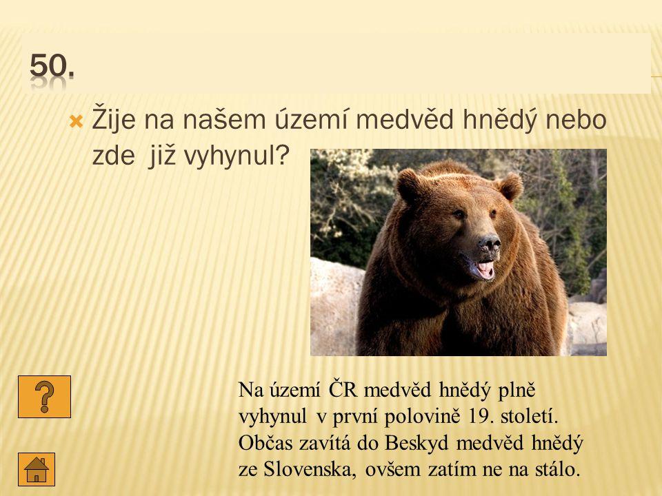  Žije na našem území medvěd hnědý nebo zde již vyhynul.