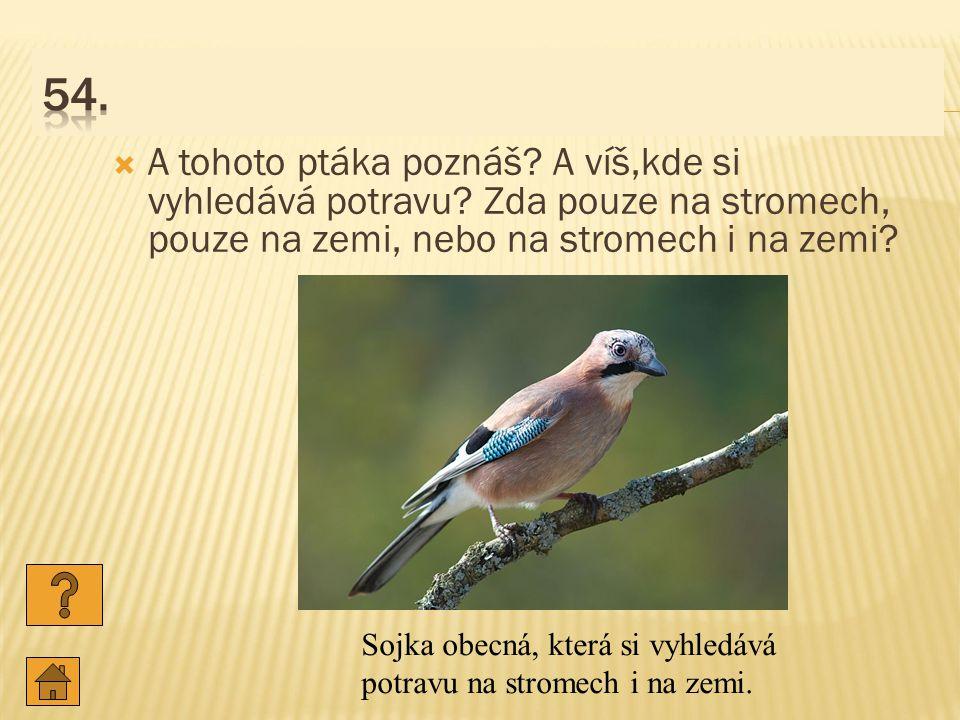  A tohoto ptáka poznáš.A víš,kde si vyhledává potravu.