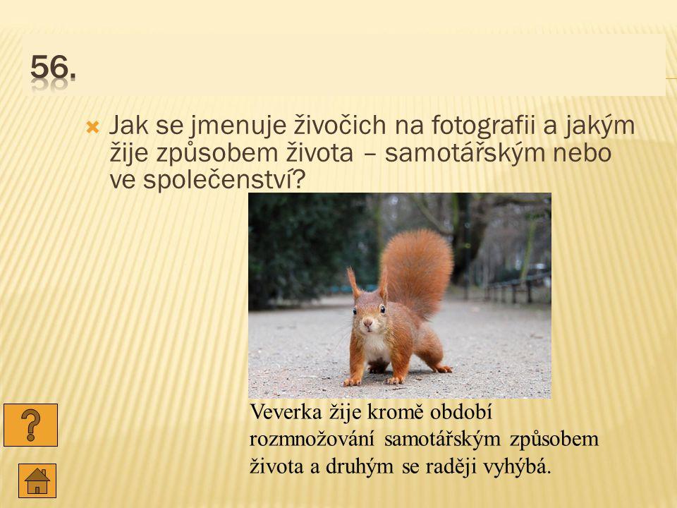  Jak se jmenuje živočich na fotografii a jakým žije způsobem života – samotářským nebo ve společenství.