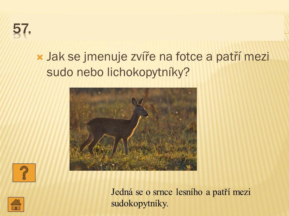  Jak se jmenuje zvíře na fotce a patří mezi sudo nebo lichokopytníky.