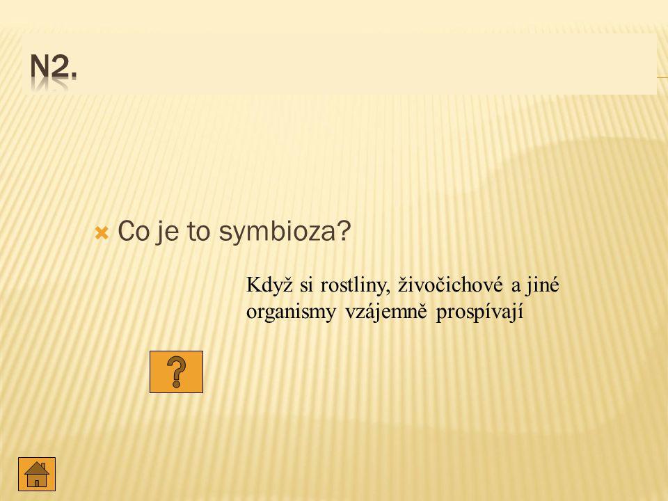  Co je to symbioza? Když si rostliny, živočichové a jiné organismy vzájemně prospívají