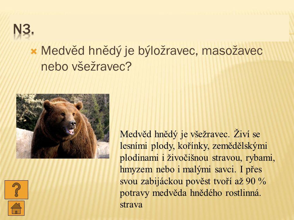  Medvěd hnědý je býložravec, masožavec nebo všežravec.
