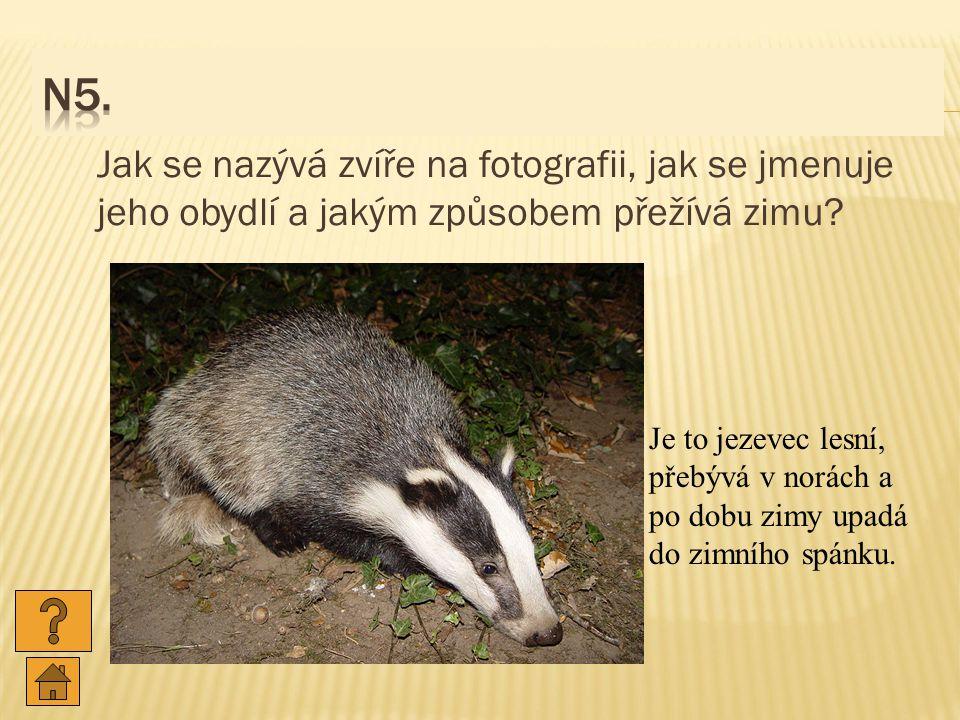 Jak se nazývá zvíře na fotografii, jak se jmenuje jeho obydlí a jakým způsobem přežívá zimu.