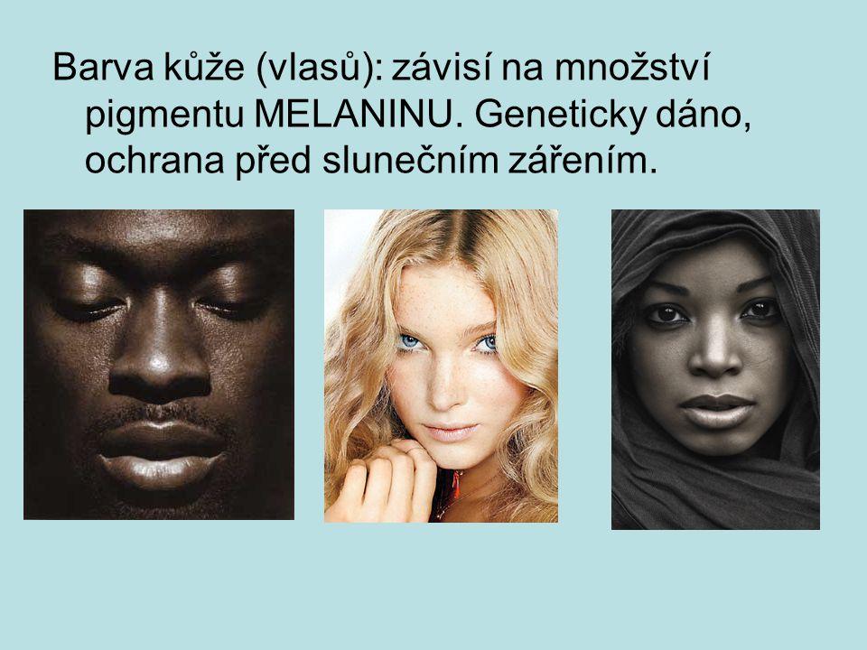 Barva kůže (vlasů): závisí na množství pigmentu MELANINU.