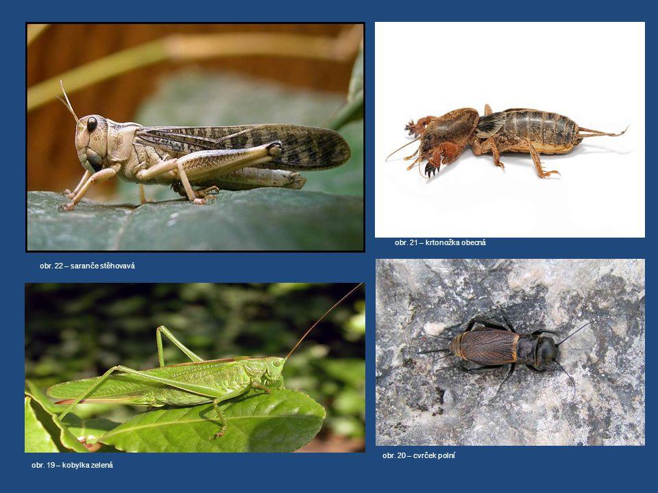 obr. 22 – saranče stěhovavá obr. 19 – kobylka zelená obr. 20 – cvrček polní obr. 21 – krtonožka obecná