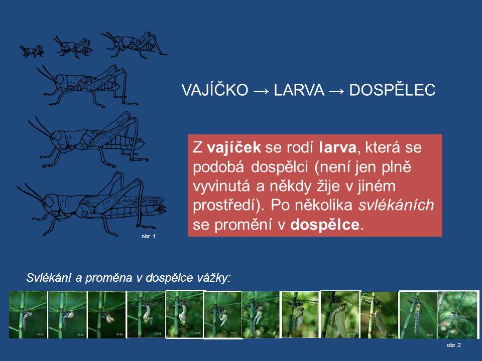Zdroje  DOBRORUKA, Luděk J.a spol. Přírodopis I.