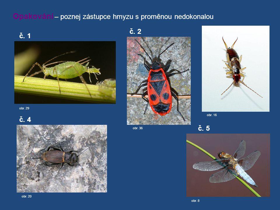 Opakování – poznej zástupce hmyzu s proměnou nedokonalou obr. 29 č. 1 obr. 36 č. 2 obr. 16 č. 3 obr. 8 č. 5 obr. 20 č. 4