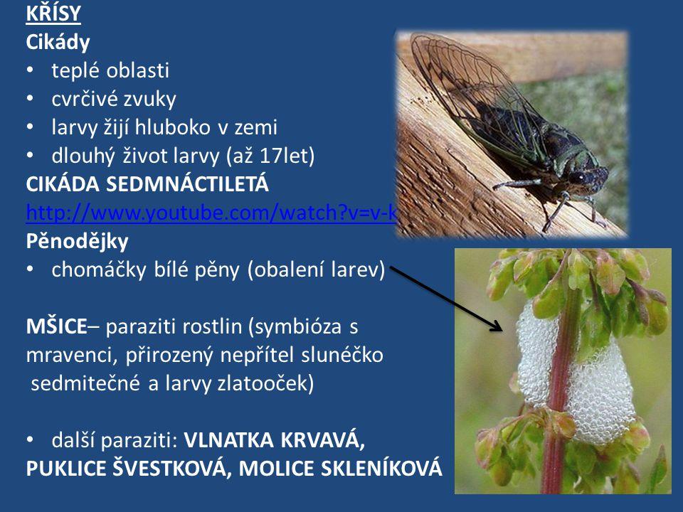 KŘÍSY Cikády teplé oblasti cvrčivé zvuky larvy žijí hluboko v zemi dlouhý život larvy (až 17let) CIKÁDA SEDMNÁCTILETÁ http://www.youtube.com/watch?v=v