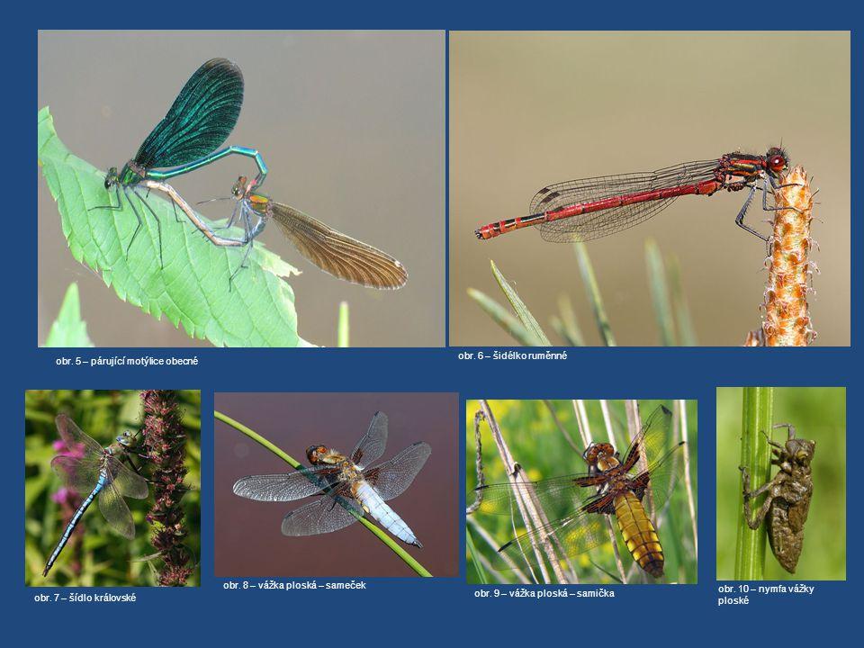 obr. 6 – šidélko ruměnné obr. 7 – šídlo královské obr. 8 – vážka ploská – sameček obr. 5 – párující motýlice obecné obr. 10 – nymfa vážky ploské obr.