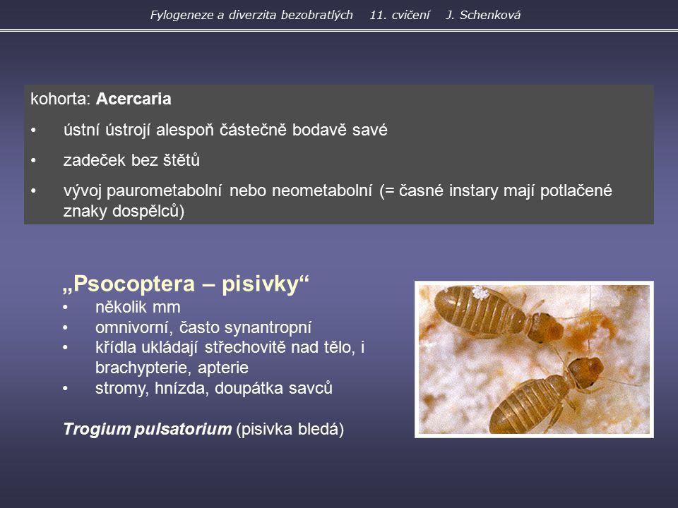 """""""Psocoptera – pisivky"""" několik mm omnivorní, často synantropní křídla ukládají střechovitě nad tělo, i brachypterie, apterie stromy, hnízda, doupátka"""