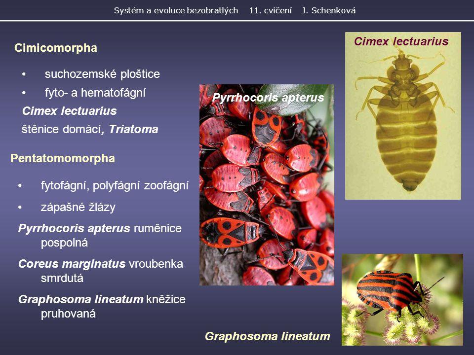 suchozemské ploštice fyto- a hematofágní Cimex lectuarius štěnice domácí, Triatoma Systém a evoluce bezobratlých 11. cvičení J. Schenková Cimicomorpha